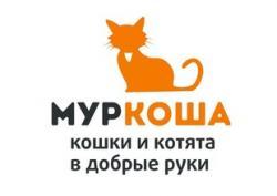 Приют для кошек Муркоша